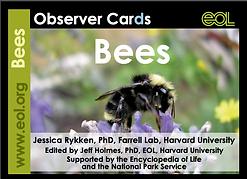 observer cards.png