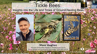 tickle bees copy.png