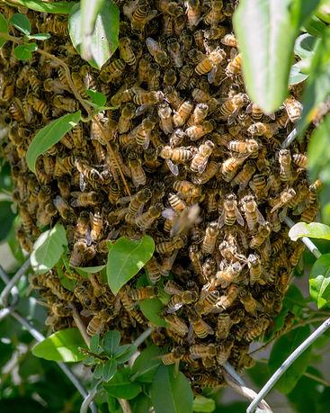 1fence_swarm.jpg