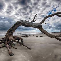 Terri Anderson Photography | Jacksonville FL
