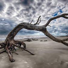 Terri Anderson Photography   Jacksonville FL