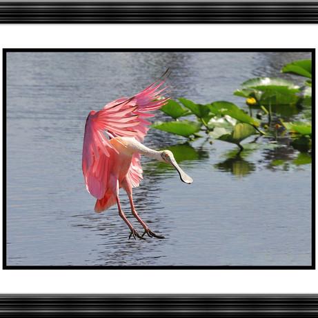 LaDora Sims   Merritt Island FL