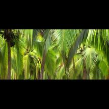 Steve Vaughn Panoramic Photography | Winter Park FL