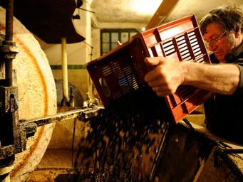 南仏が誇るフルーティーな最高級オリーブオイル「ニコラ・アルジアリ」の伝統的製法を見学する新ツアー