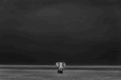 Prehistorical Memory - Jeffrey Wu