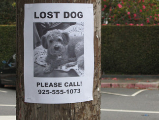 Prevent Your Pet from Becoming Lost