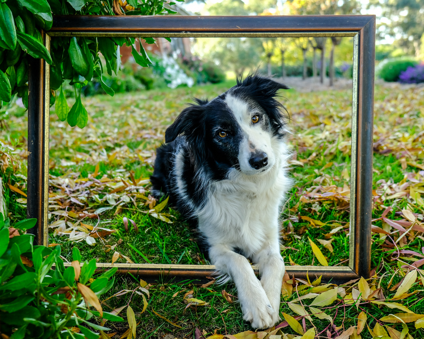 Molly Framed