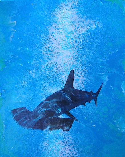 Hammerhead Shark in shallows