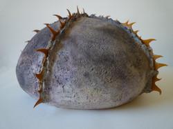 Echinodermus-I