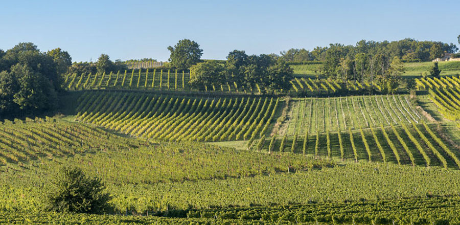 Vignes-Monbazillac