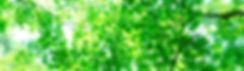 PAK86_miagerebamidori1226_TP_V.jpg