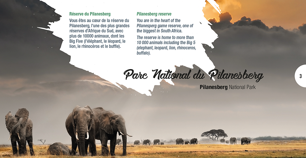 Ambiance Graphique Evenement South Africa - Agence de Voyage