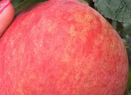 Melba - Vasarinė obelis