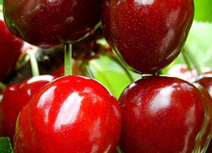Notė - Vyšnių sodinukas