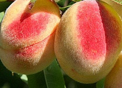 Maira - Persikų sodinukas