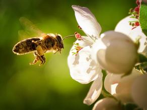 Znáte život včel? Umí překvapit víc než jen sladkým medem