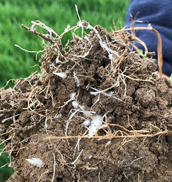 Understanding your soil