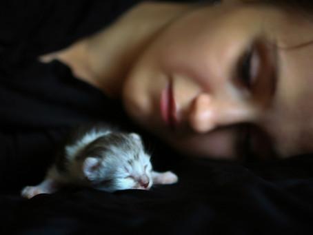 Почему коты и кошки спят на своих хозяевах: мистическое и научное объяснение.