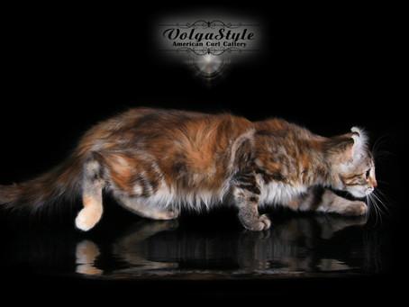 Топ 9 наиболее распространенных ошибок в питании кошек.