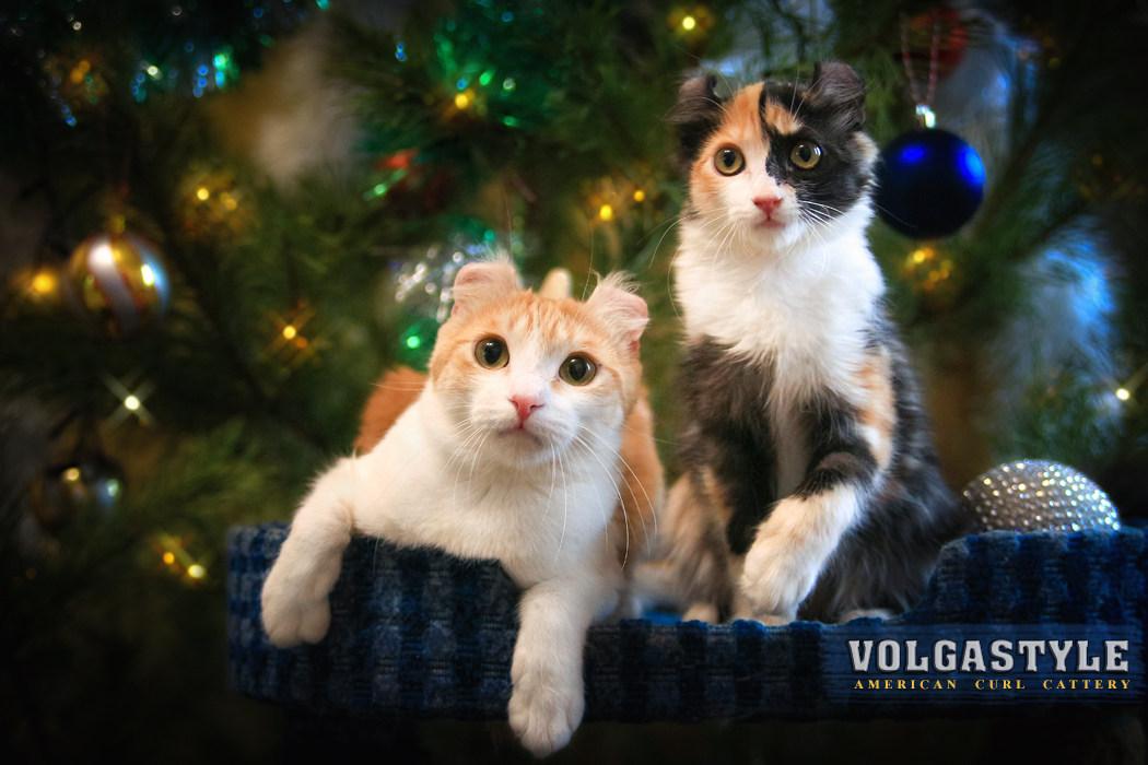 ROMANCE VOLGASTYLE с дочкой X`ATTICA VOLGASTYLE