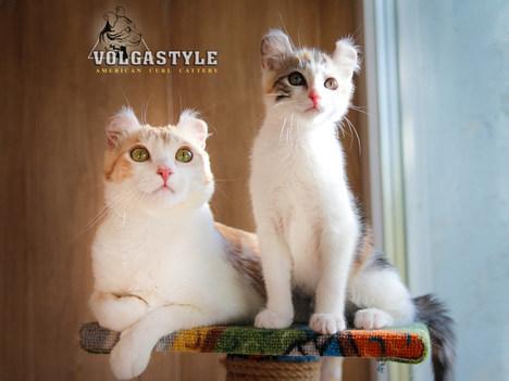 XSENIYA VOLGASTYLE с мамой ROMANCE VOLGASTYLE