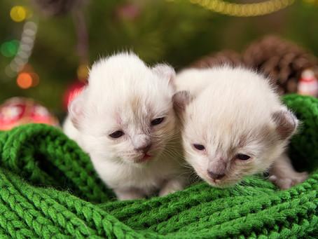 О социализации котят или почему нельзя брать котят раньше трёх месяцев.