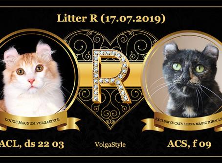 Литтер R. У нас родились котята!