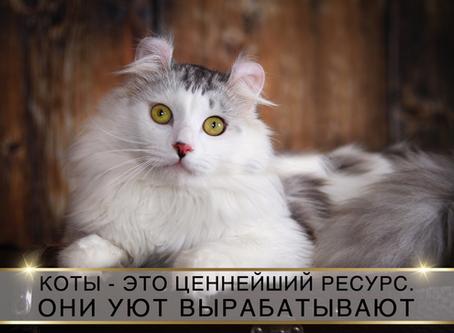 Без кота и жизнь не та: обязанности по дому каждого кота.