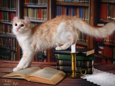 Как отучить кота лазить по столу.