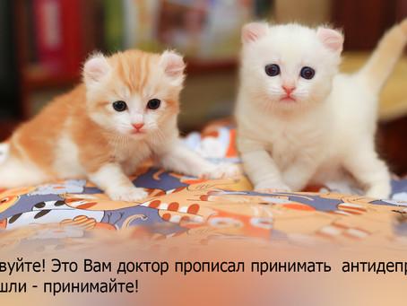Как кошки лечат человека или фелинотерапия.