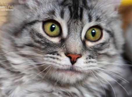 50 интересных фактов о кошках.