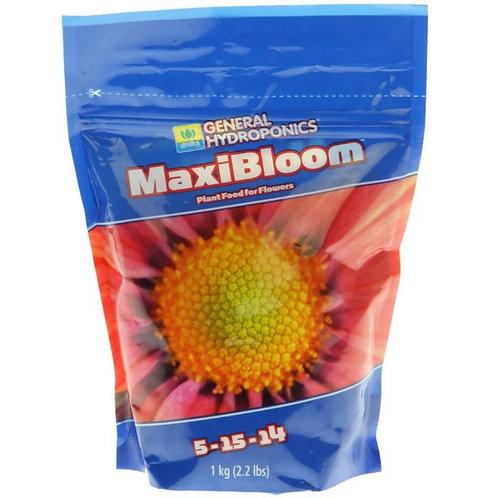 Maxi Bloom 16lb
