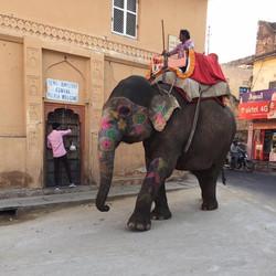 Elephant Ride in Amer Fort, Jaipur