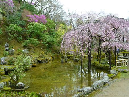 千利休が作庭した庭園「竹林院」@奈良