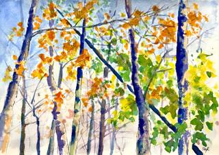 Autumn Colors, 2019
