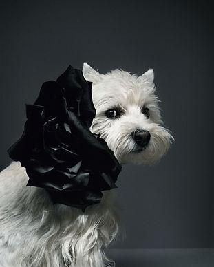 #01 Fashion dog