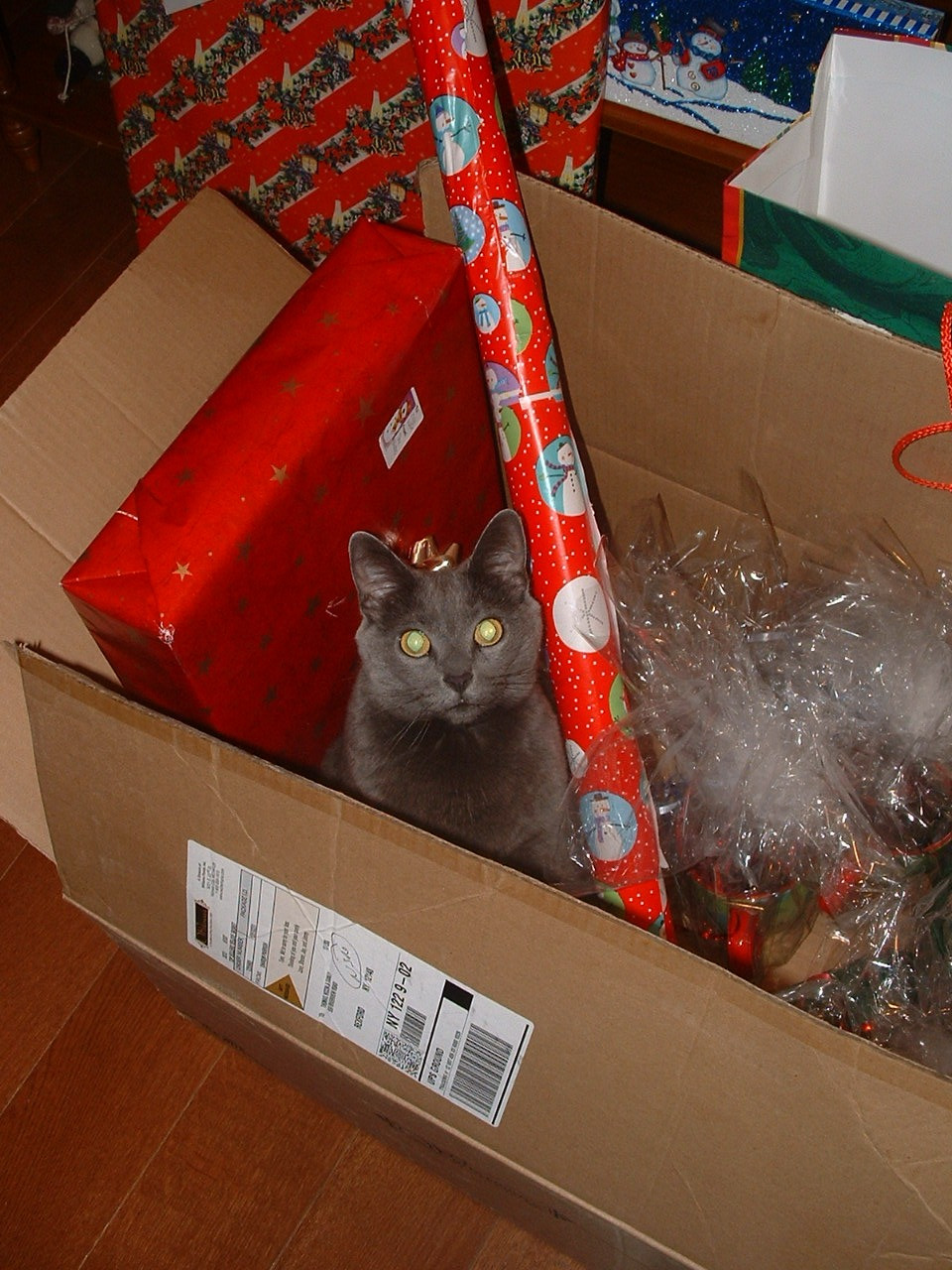 Cat in a box filled with wrapping paper and presents