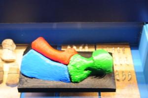 pinna delfino pliocenico