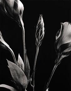 Flower-2A.jpg
