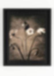 Popies Lith print H50 x W40 - museum gla