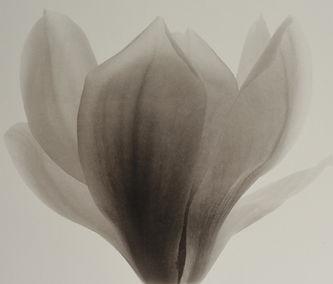 Magnolia5 copy.jpg