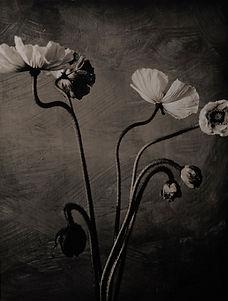 BW Flower-2