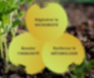 Régénérer microbiote (1).png