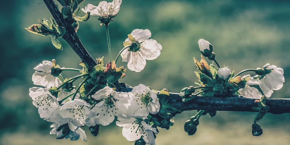 Cure détox du printemps !