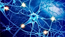 нейрон4.jpg