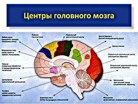 Мозг - центр управления