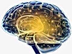 мозг4.jpg