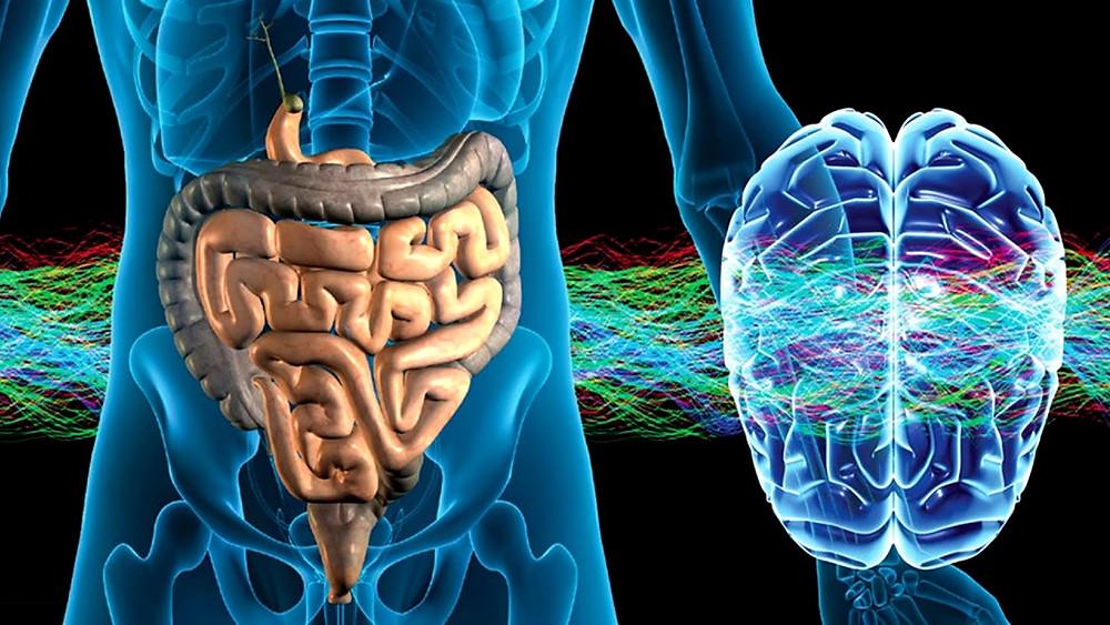 Кишечник - второй мозг и 70 % иммунитета