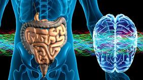 Здоровый кишечник или Как повысить иммунитет в период эпидемии ОРВИ. И при чем здесь кишечник…