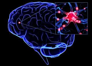 мозг3.jpg